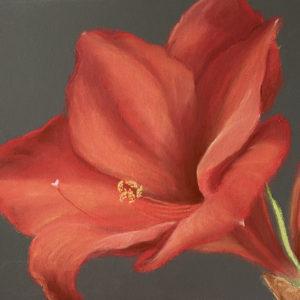 Red Amaryllis in pastel